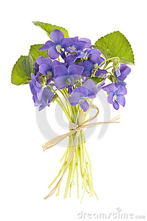 Tiff Bloom Bouquet By Velcris One bouquet of violets stock image image 24721241
