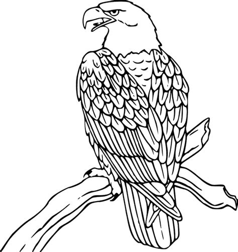 bald eagle coloring page animals town animals color
