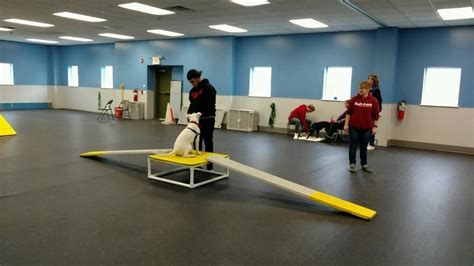 st huberts therapy news st hubert s animal welfare center