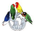 Harga Pakan Burung Lovebird Primus setting kandang ternak lovebird atau glodok kayu agar
