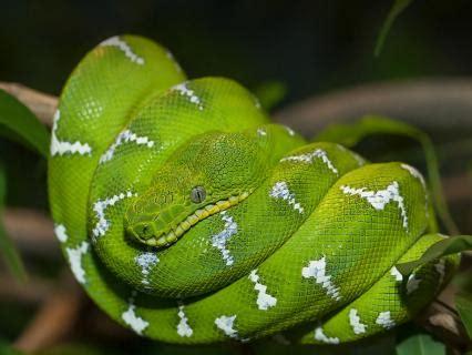 reptiles san diego zoo animals plants