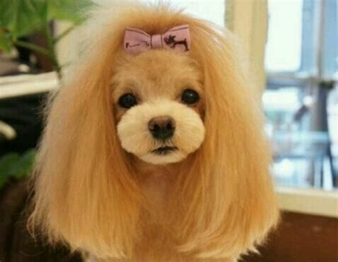 curly haired dog haircuts cute dog hairstyles that are better than your haircut
