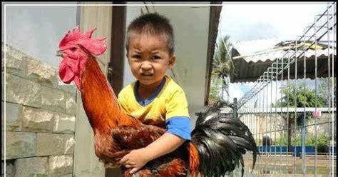 Bibit Ayam Pelung Cianjur Info Harga Ayam Pelung Cianjur Terlengkap Update Www Agrinak