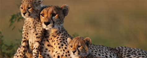 Safitri Syari luxury safari trips safari ideas