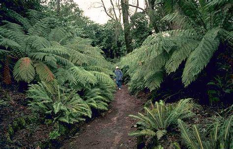 Wombat Hill Botanical Gardens Wombat Hill Botanic Gardens