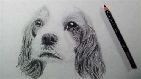 drawing  dog puppy time lapse youtube