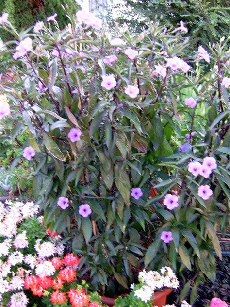 Wer Kennt Diese Pflanze by Wer Kennt Diese Pflanze Plants Botany Actias