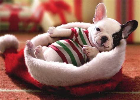 puppy sitting  santa hat box   dog christmas cards  avanti press