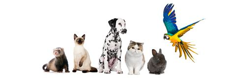 pet care veterinary services for all your pet needs