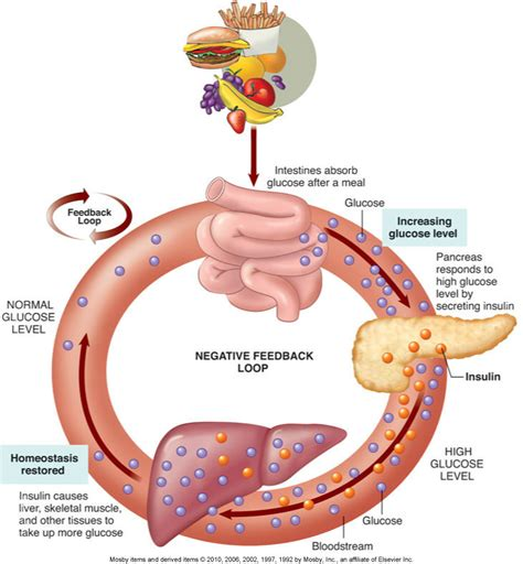 diagram of the endocrine system endocrine system diagrams mr i s biology resource page