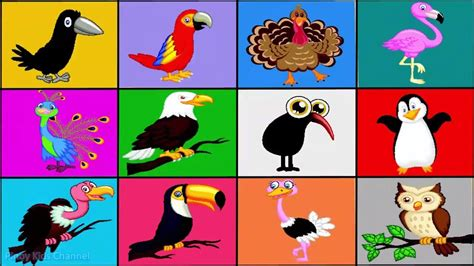 learn birds names for children bird sounds toddlers babies