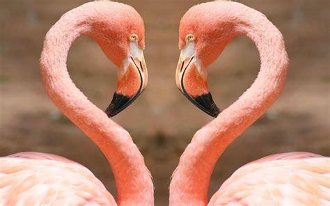 pink flamingos pink flamingo hearts fashion art love