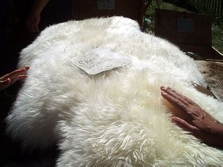 caring for sheepskin rug how to care for a sheepskin rug