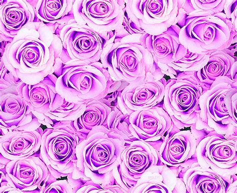 tumblr pattern backgrounds purple purple roses wallpaper tumblr www pixshark com images
