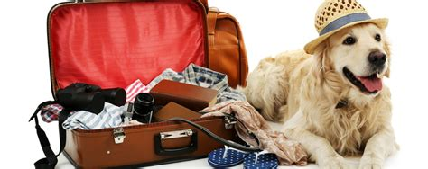moving with a tips for moving out of state with a pet better homes and gardens real estate