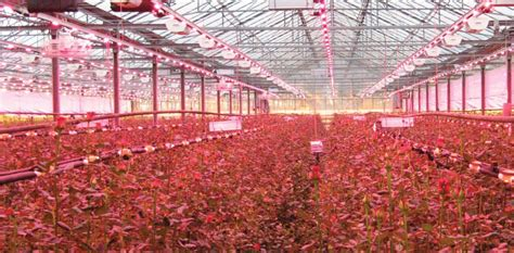 Used Grow Lights by Greenhouse Tips To Gardeners Led Grow Light