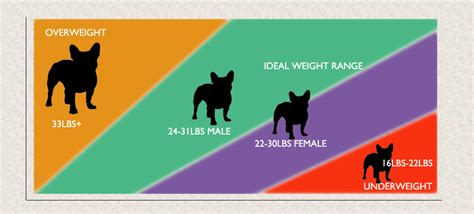 bulldog puppy weight chart bulldog weight guide is your frenchie healthy