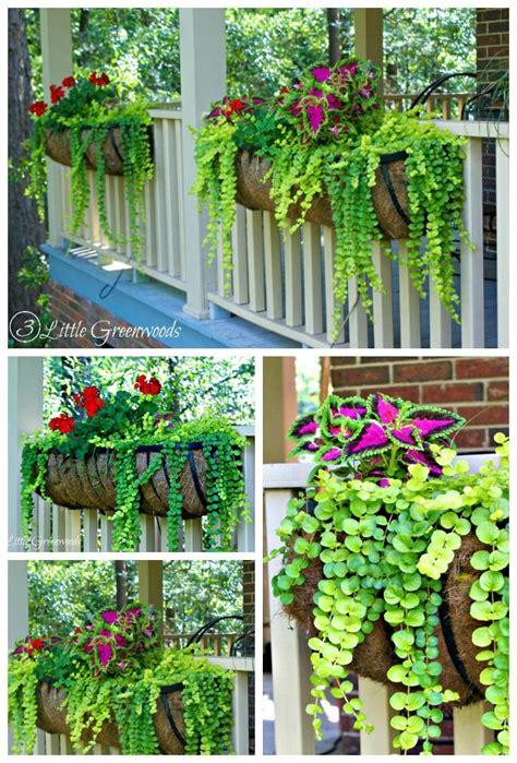 porch hangers best 25 container flowers ideas on pinterest planter ideas container plants and flowers garden