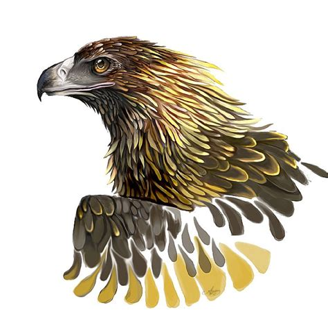 tattoo wedge tail eagle how to draw a wedge tailed eagle google search art