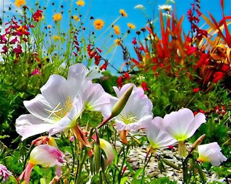 beleza da natureza fotos e imagens os entendimentos da natureza com o ser humano raciocinar