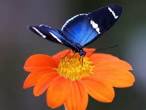 colorful flowers picture orange flowers in bloom light flowers and butterflies butterfly orange flower