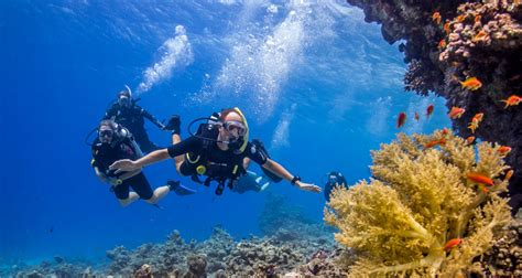 dive dahab sea dancer dive centeropen water diver sea dancer dive