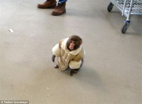 Ikea Parca Black althouse quot tiny monkey in a coat runs amok in ikea