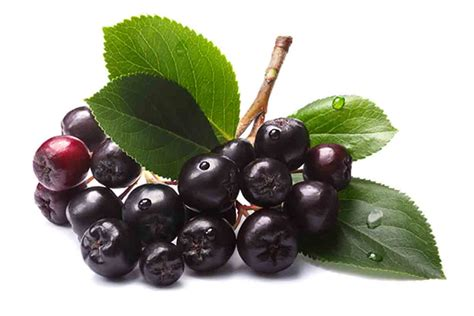 And Berries 20 types of berries and their health benefits nutrition