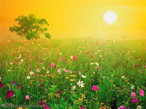 imagenes de jardines flores the sunblackure dos mil a 241 os en el jard 237 n de las flores