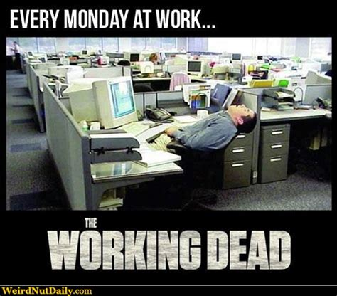Cubicle Meme - funny pictures weirdnutdaily the working dead