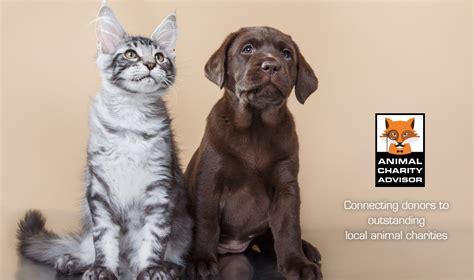7 Great Animal Charities by Animal Charity Advisor