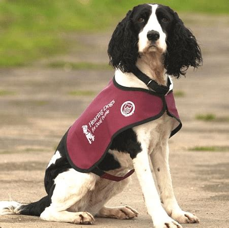 hearing dogs journalist liz jones accused of irresponsible journalism as deaf charity finds