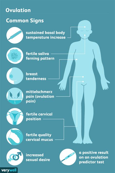 signs  ovulation  detect   fertile time