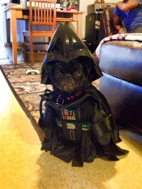 pug darth vader costume pugs dressed as things pugs vs costumes