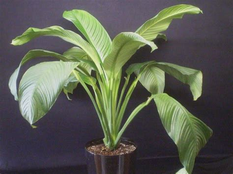 20 most common house plants photos of common indoor house plants