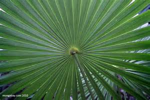 Plants In Tropical Rainforests - rainforest plants tropical rainforest plants tedlillyfanclub