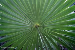 Plants In Tropical Rainforest - rainforest plants tropical rainforest plants tedlillyfanclub