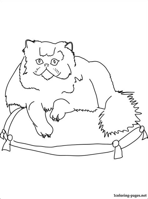 persian cat coloring page coloring pages