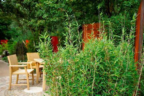 garten was pflanzen was ist bambus bambuspflanzen bambus wissen was ist