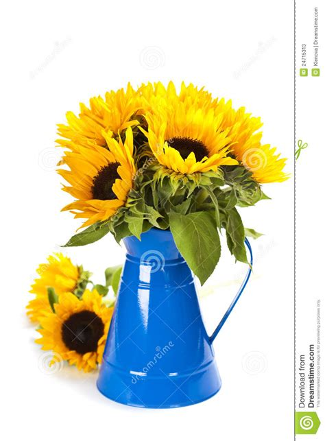 Vase Of Sunflowers Sunflowers In A Blue Vase Stock Photos Image 24715313
