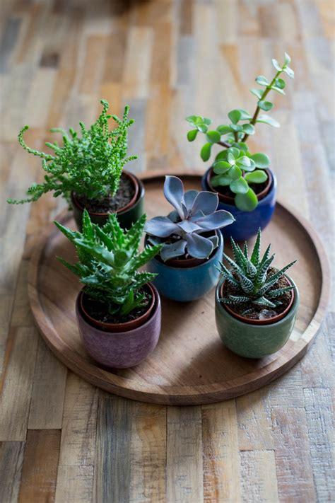 pflanzen bestellen pflanzen im bestellen