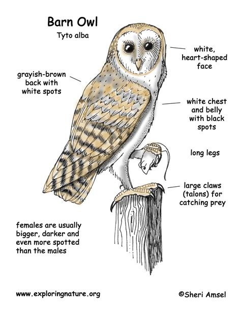 owl diagram for wiring diagram schemes