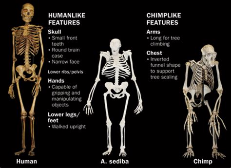 how did s originate where do humans come from science news for students