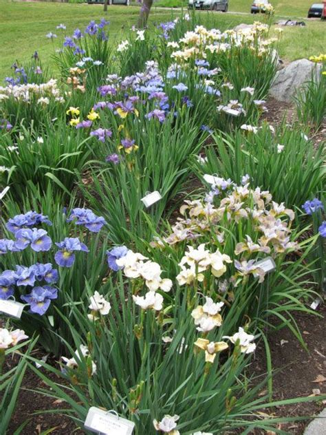 pin by kat gillies rector on diy garden and home projects