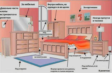 Schädlinge Im Bett by Wanzen In Der Wohnung Miridae Weichwanzen Phytocoris Ulmi