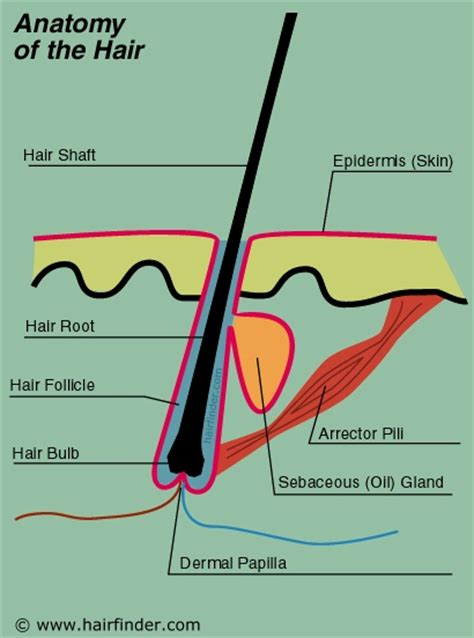 what is the name for hair that is long in the back and short in the front uncategorized collegestudenthaircaretips page 2
