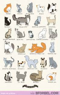 types of cats the different types of cat breeds not all cats are just