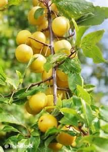 les 25 meilleures id 233 es concernant jardin fruitier sur