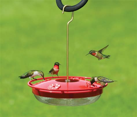 favorite hummingbird feeders the backyard naturalist