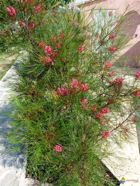 Arbres Fleurs Roses by Photo Arbre Fleur Ros 233